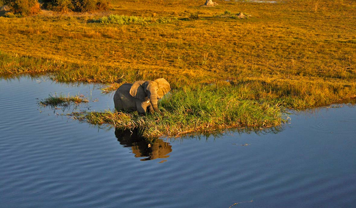 Elephant In the Delta