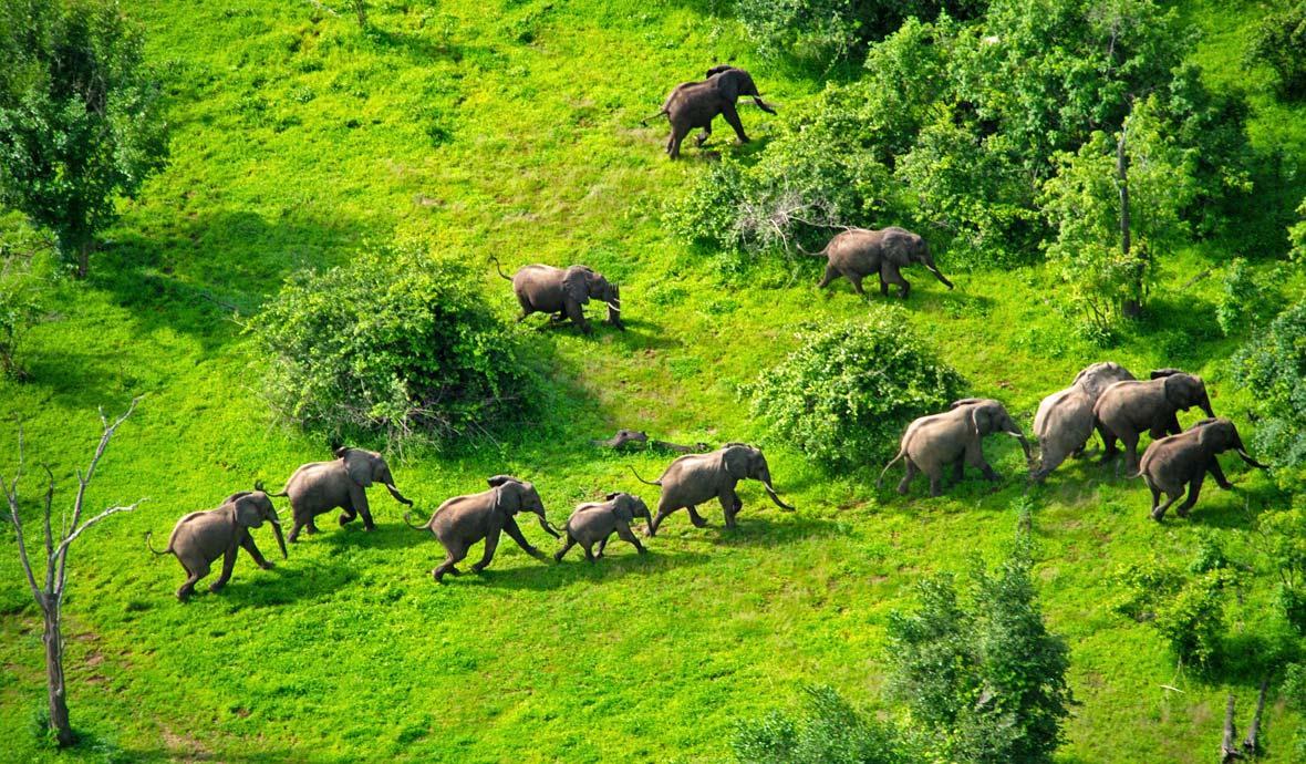 Herd of Elephants in Zimbabwe